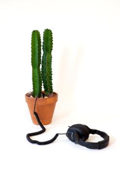 http://www.lindsaymrobbins.com/files/gimgs/th-45_cactus4_small_v2.jpg